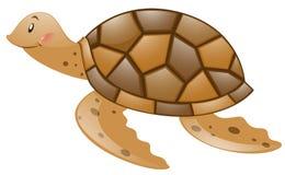Tartaruga de Brown no fundo branco Foto de Stock Royalty Free