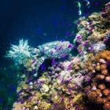 Tartaruga de Hawksbill Imagem de Stock Royalty Free