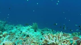Tartaruga de Hawksbill em um recife de corais 4K filme