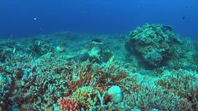Tartaruga de Hawksbill em um recife de corais 4K vídeos de arquivo