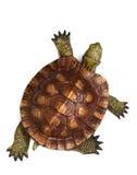 Tartaruga de madeira Fotografia de Stock Royalty Free