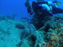 Tartaruga de mar com mergulhador imagem de stock royalty free