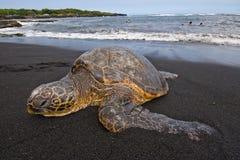 Tartaruga de mar na praia Imagem de Stock Royalty Free