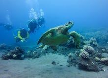 A tartaruga de mar nada na frente do grupo de mergulhadores Foto de Stock Royalty Free