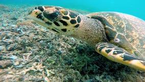 Tartaruga de mar no recife coral video estoque