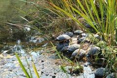 Tartaruga de Milão do parque de Simplon fotos de stock