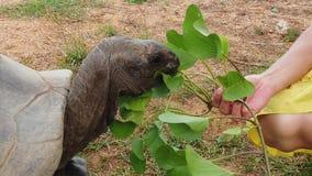 Tartaruga de Seychelles da mulher filme