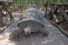 Tartaruga de Zanzibar imagem de stock
