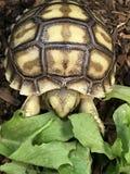 Tartaruga del bambino fotografia stock libera da diritti