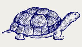 Tartaruga dell'orecchio Fotografia Stock