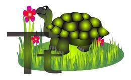 Tartaruga della tartaruga Immagini Stock Libere da Diritti