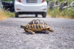 Tartaruga della terra sulla strada Immagine Stock