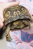 Tartaruga di casella orientale fotografia stock