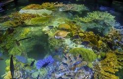 Tartaruga di mare in acquario fotografie stock libere da diritti