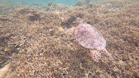 Tartaruga di mare all'isola di Miyako, Okinawa, Giappone archivi video