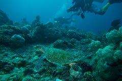 Tartaruga di mare con gli operatori subacquei Fotografia Stock Libera da Diritti
