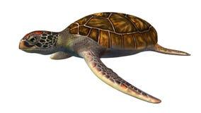 Tartaruga di mare verde isolata su fondo bianco Fotografia Stock Libera da Diritti