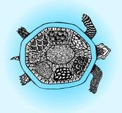 Tartaruga di scarabocchio Abbozzo disegnato a mano Fotografie Stock Libere da Diritti