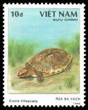 Tartaruga di scatola a strisce di cinese tre Fotografia Stock Libera da Diritti