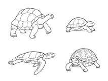 Tartaruga e tartaruga nos esboços - vector a ilustração ilustração royalty free