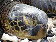 Tartaruga e poluição de mar Imagens de Stock