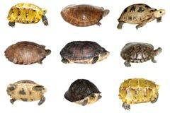 Tartaruga e tortoise Fotografie Stock Libere da Diritti