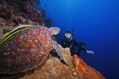 Tartaruga ed operatore subacqueo di mare verde Fotografie Stock Libere da Diritti