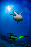 Tartaruga ed operatore subacqueo in Tenerife Fotografia Stock