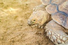A tartaruga grande imagem de stock