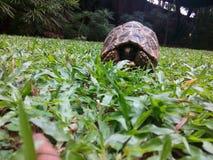 Tartaruga lindo da natureza da beleza fotografia de stock