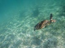 Tartaruga marina Fotografie Stock