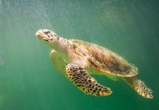 Tartaruga marina sotto il mare verde-cupo fotografia stock libera da diritti