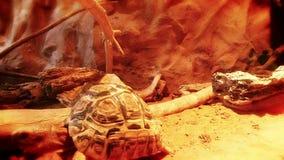Tartaruga nel clima caldo stock footage