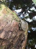 Tartaruga nel suo guscio immagini stock libere da diritti