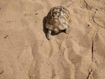 Tartaruga nella spiaggia Fotografia Stock Libera da Diritti