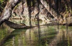 Tartaruga nelle primavere fotografie stock
