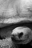 Tartaruga no jardim zoológico do mundo dos animais selvagens Imagens de Stock