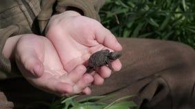 A tartaruga pequena clamberring acima das mãos humanas do ` s filme