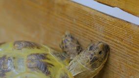 A tartaruga rasteja lentamente para a frente vídeos de arquivo