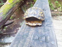 Tartaruga Shell Fotografia de Stock