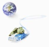 Tartaruga sulla lan che ha disconnesso dal mondo Fotografia Stock