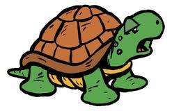 Tartaruga/tartaruga Fotografia de Stock Royalty Free