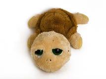 Tartaruga triste Fotografia Stock