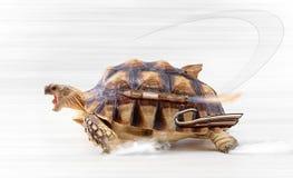 Tartaruga veloce Fotografia Stock Libera da Diritti