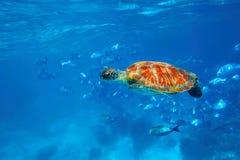 Tartaruga verde fotografia stock libera da diritti