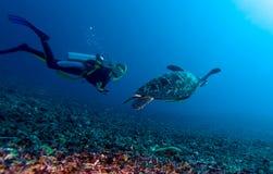 Tartaruga verde e mergulhador, Lombok, Indonésia foto de stock