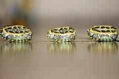 tartarugas foto de stock royalty free