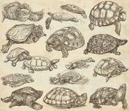 Tartarugas - coleção de desenhos da mão, esboços a mão livre em velho Foto de Stock