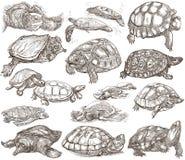 Tartarugas - coleção de desenhos da mão, esboços a mão livre no whit Fotografia de Stock Royalty Free