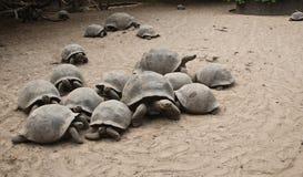 Tartarugas de Galápagos fotografia de stock royalty free